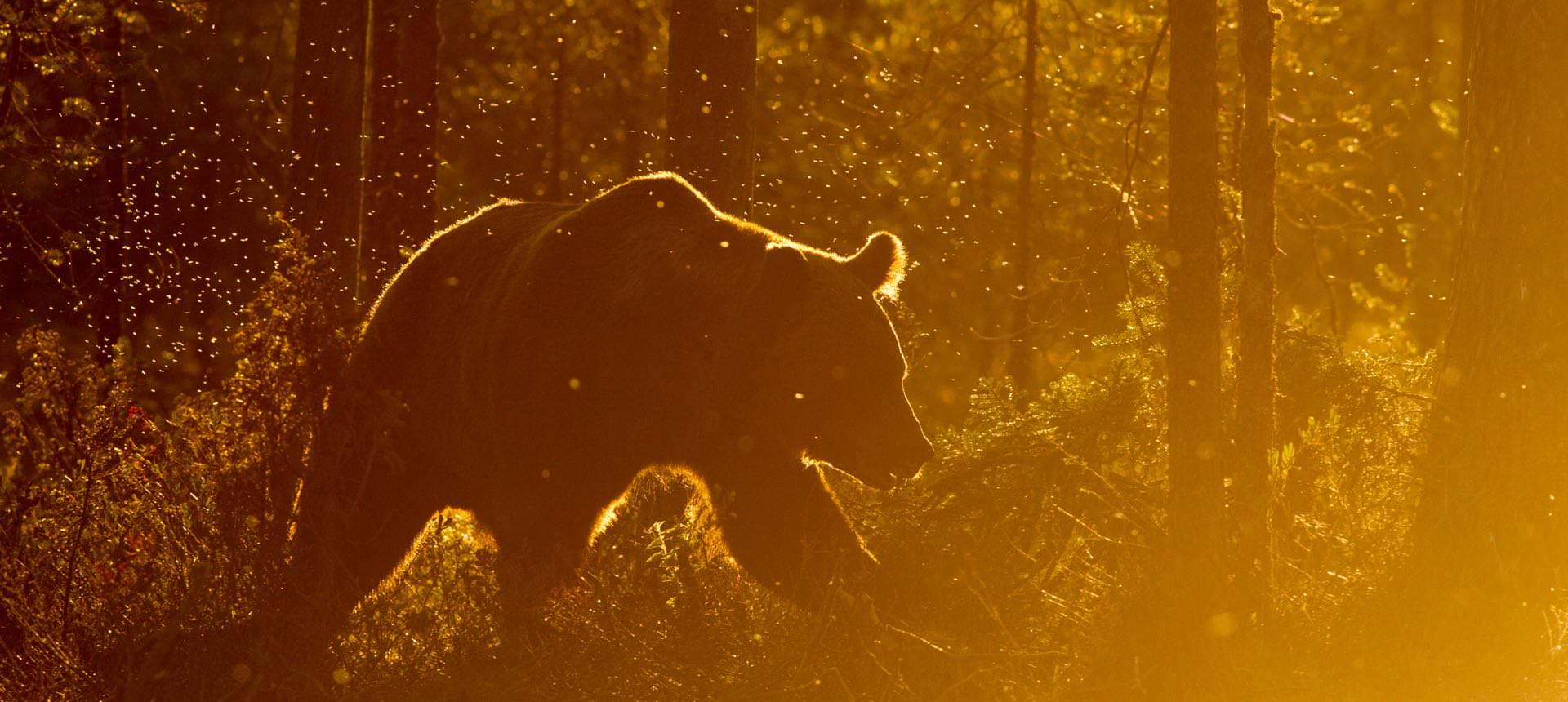 Beitragsfoto: Beim Alten in den Wäldern - Geschichten von Bären und Jägern