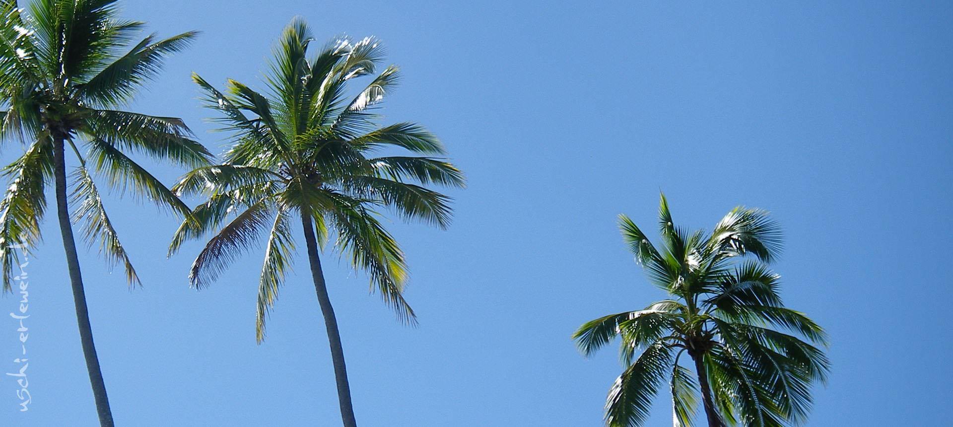 Portfoliofoto: Ohrblüten und Wellentanz - Geschichtenerzählen trifft auf Südseetänze
